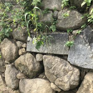 岡崎城へ行こう・意外と見どころ多いんです