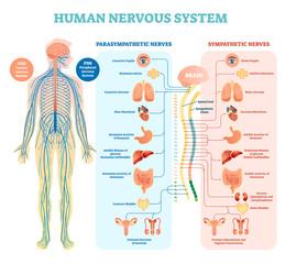 自律神経の話⑥ 2つのストレスタイプ