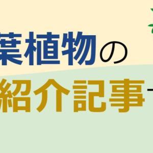 【6月版】観葉植物たちの成長具合をレポートします。
