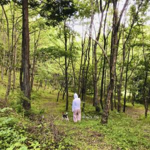 #148 森生活97日目 香害と化学物質過敏症のご質問のお答え