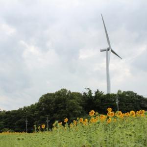 風力発電所見学に適した季節・天気・風速・場所【風車ファン目線から】