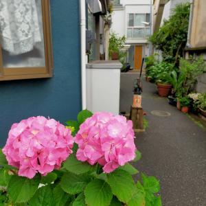 西新宿路地裏風景 手押しポンプの井戸 紫陽花 そらちゃんの決意