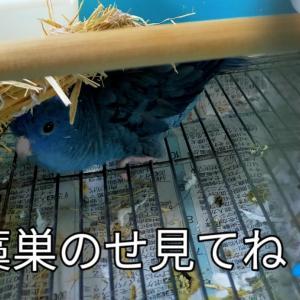 そらちゃんの新芸  おうちカフェ タラコパスタ 塩大福 紫陽花
