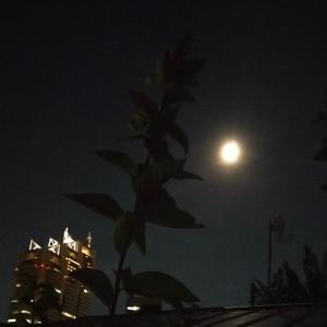 中秋の名月 そらちゃんもお月見♪ おはぎ ずんだ餅 日本酒 栃尾の揚げ なす生姜焼き