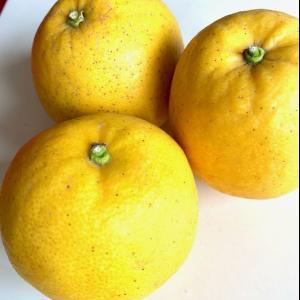 オレンジピール作り