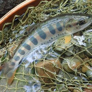ルアーとテンカラで楽しむ渓流釣り 木曽川水系 釣行記