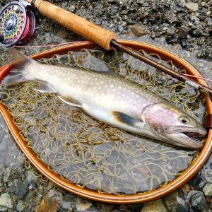 大腸内視鏡検査とイワナ 天竜川水系 フライフィッシング釣行記