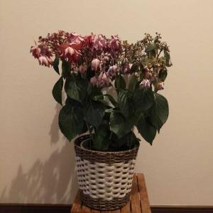 15歳年上の夫から初めて【母の日】に花をもらった話