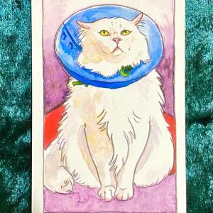 【皇帝】猫のタロット 今週の一枚