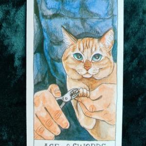 【ソードの5】猫のタロット 今週の一枚