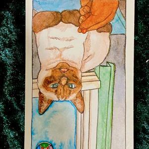 今日の猫のタロット【ペンタクルのペイジ】