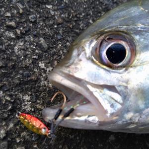 食い渋るメッキとセイゴを攻略!6/10ライトゲーム釣行、朝の部。