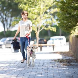 【犬と散歩】おすすめ人気お散歩バッグ