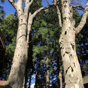 【投資に学ぶ】林業経営はリスク分散が重要