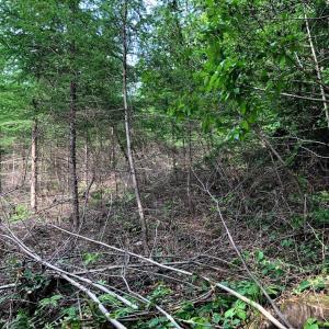 【林業】除伐作業完成・達成感がやりがいに