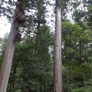 【WOOD JOB!】林業(山しごと)をはじめよう!