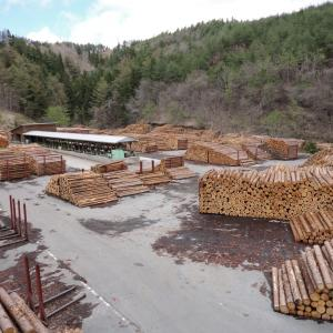 【木材の価格を知ろう!】樹種別解説その①