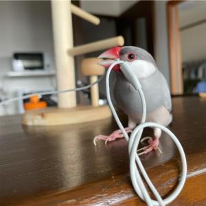 放鳥時のお部屋