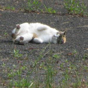 写真はノラ猫達の写真ですが・・・・§(* ̄▽ ̄*)§