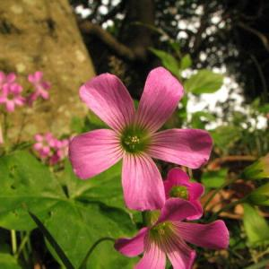 前に撮った写真 花です。o(〃^▽^〃)o
