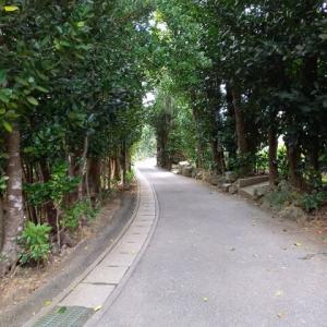 福木の並木