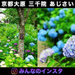 三千院の紫陽花(あじさい)