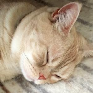 猫の目の上は何故ハゲてる?理由や注意点を解説