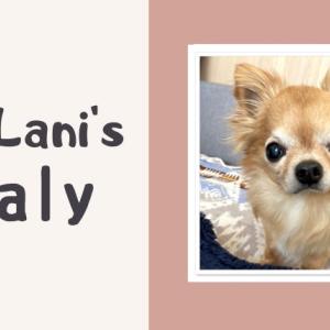 【愛犬の闘病記】5月の血液検査結果(腎臓の数値が少し改善)
