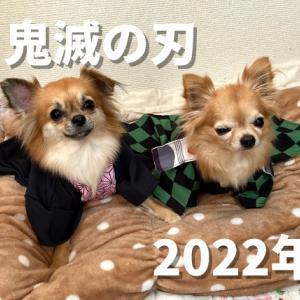 カイ&ラニ、映画「犬版鬼滅の刃」 制作発表会に出席