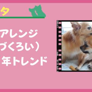 犬が他の犬を舐める行為(毛づくろい)がヘアアレンジに見えてきた