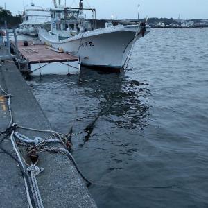 2021.05.29 清水港釣行記『黒鯛ヘチ釣り・落とし込み』