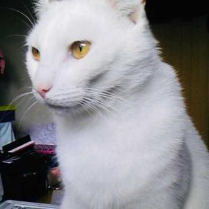 Somnum pacifice possidemus. 愛猫の命日に寄せて