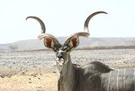 角を矯(た)めて牛を殺すな・HSPの特性は矯正できない
