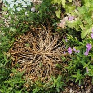 寄せ植えも難しい。。。寄せる植物の相性とか育て方とか
