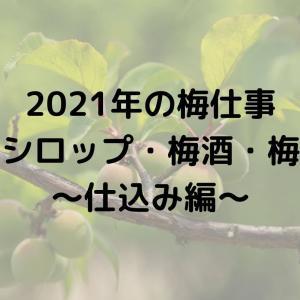 2021年☆梅仕事~仕込み編~【梅シロップ・梅酒・梅干・はちみつ梅の作り方】
