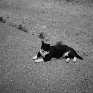 leicaM10ーDで猫を撮った話~かわいい~