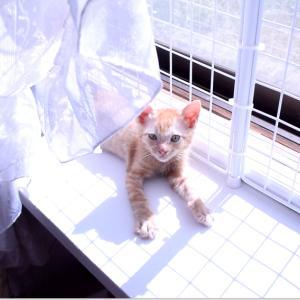 保護猫の子猫 ワクチン後の体調は良好