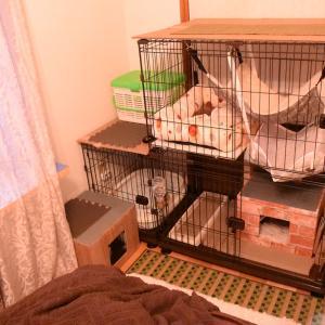 二階建ての猫ハウス!保護猫トムとチャコのケージをグレードアップ!