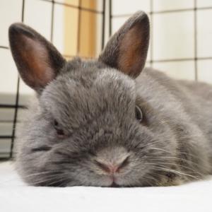 No.35/ 熟睡モードのウサギさんは○○なんです( ´ ▽ ` )