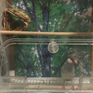 No. 36 / ユメちゃん(文鳥さん)の鳥かご