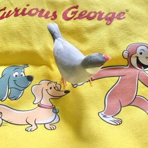 (79)おさるのジョージ80周年!期間限定ショップを見つけました。迷って2つだけ購入(^ ^)