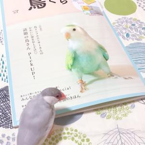 """(127)""""鳥ぐらし Vol.3""""を買いました 〜 またまたInstagramで知りました"""