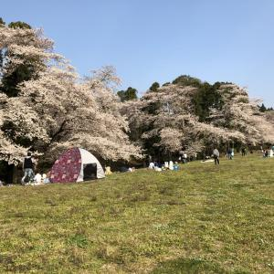 【千葉市】泉自然公園   桜の名所百選にも選ばれた!自然が美しい公園です!