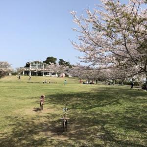 【鴨川市の大きな公園】一戦場公園(いっせんばこうえん)広い芝生広場があるよ!
