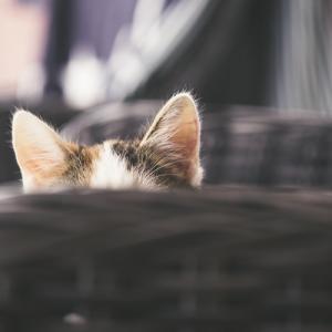 もさくネコとブログの紹介