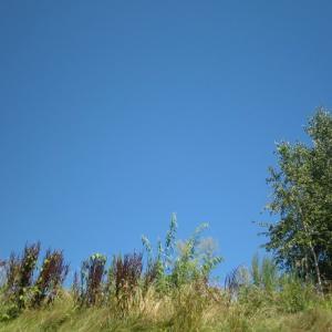 風景を見ていた:2008年の夏 北海道の空