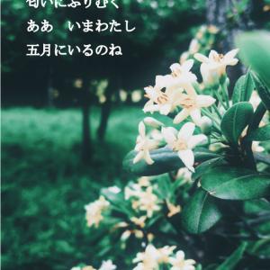 写真詩#002
