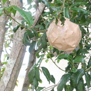 蜂の巣 ダミー 対策