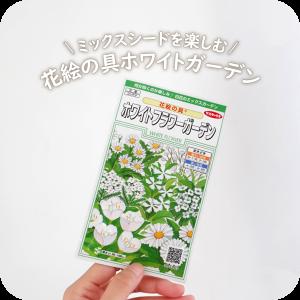 「ミックスシードを育てる楽しみ」(サカタのタネ) 花絵の具 ホワイトフラワーガーデン