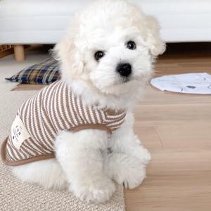 ビションフリーゼの子犬を迎えて1ヶ月目で始めたこと